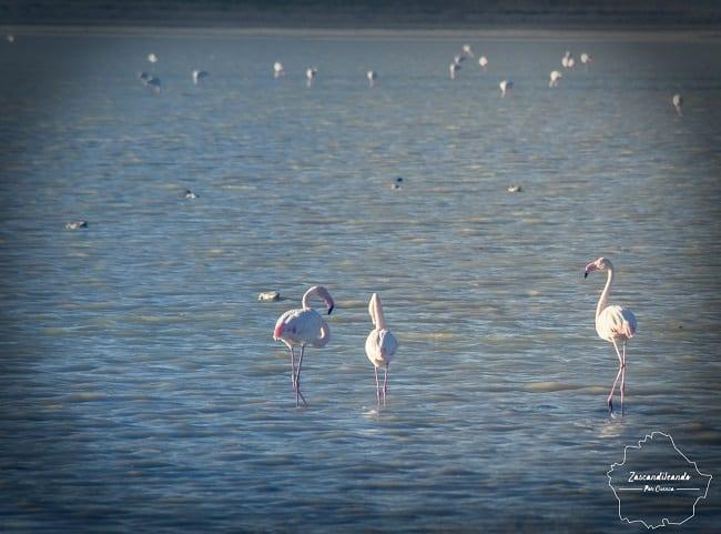 Pájaros en la Laguna