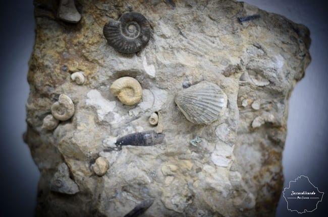 Museo_Pedrizas_Paleontologia