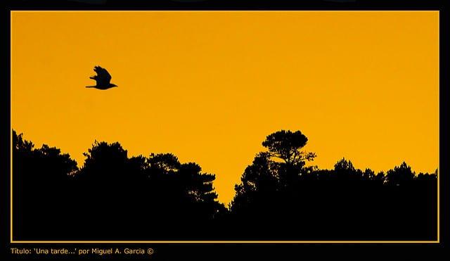 Foto de Miguel A. García https://flic.kr/p/4qvaiA
