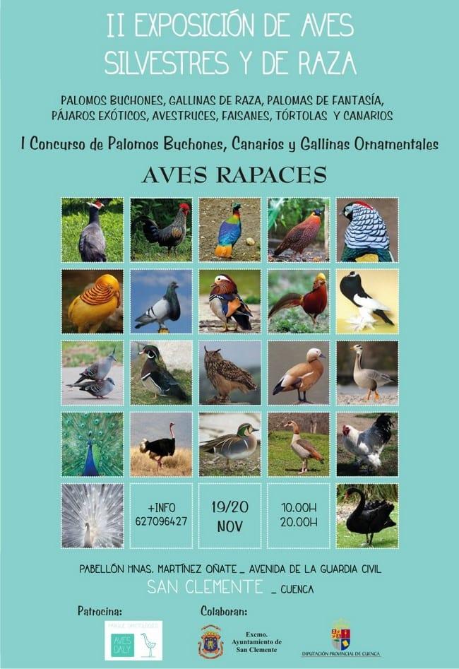 exposicion_aves_rapaces_san_clemente_cuenca