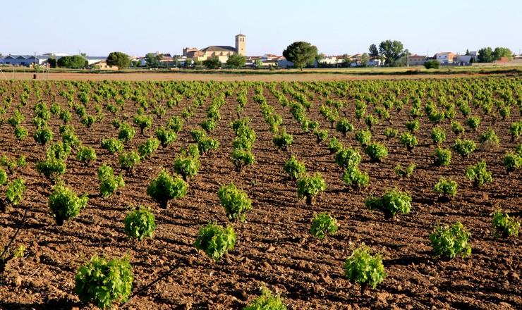 Viñas de Bodegas Campos Reales