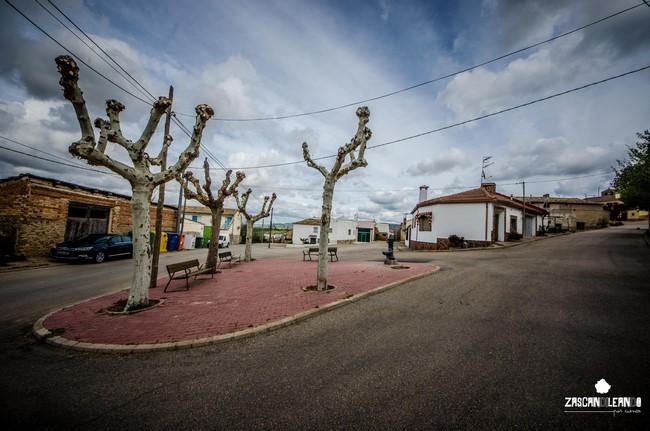 Árboles en la plaza más grande de Mohorte