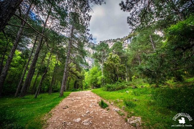 Especies como el roble, el pino, el arce o el tejo habitan en el paisaje