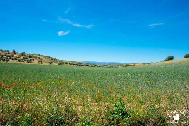 Numerosas especies pueblan el Monumento Natural Barrancas de Castrejón y Calaña