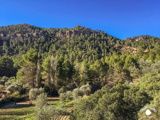 Las Hoces del Cabriel están llenas de especies como el pino silvestre
